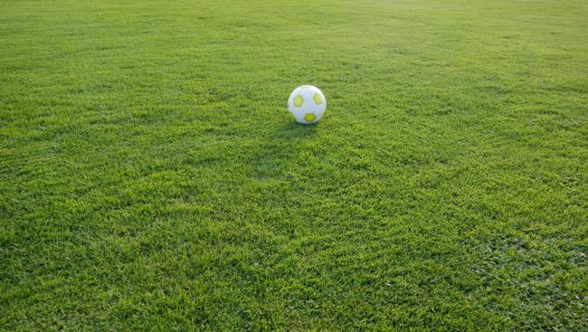 Fußballplatz Rasen